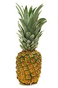 Fresh-pineapple-fruit
