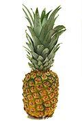 Fresh-pineapple-fruit