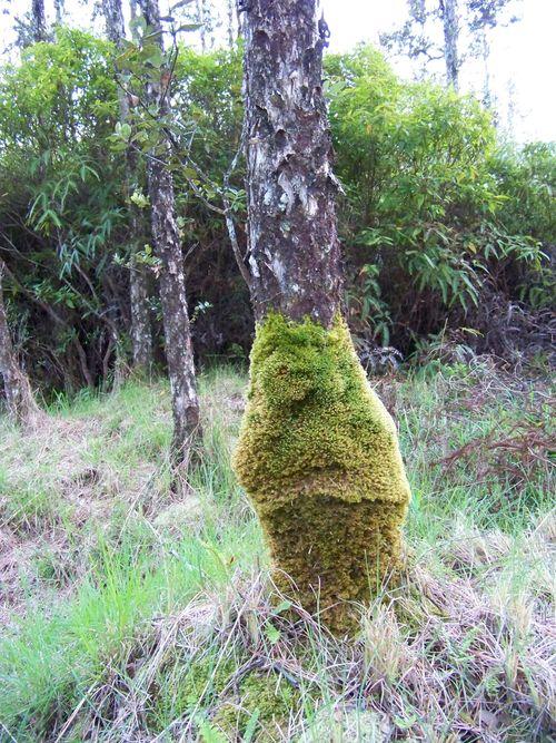 Tree-leg-warmer